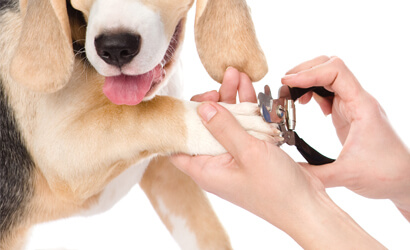 groom that dog   friendly and professional dog grooming in